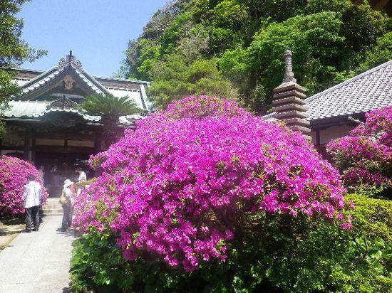 06) 12.05.13鎌倉「安養院」、ツツジ満開の頃。