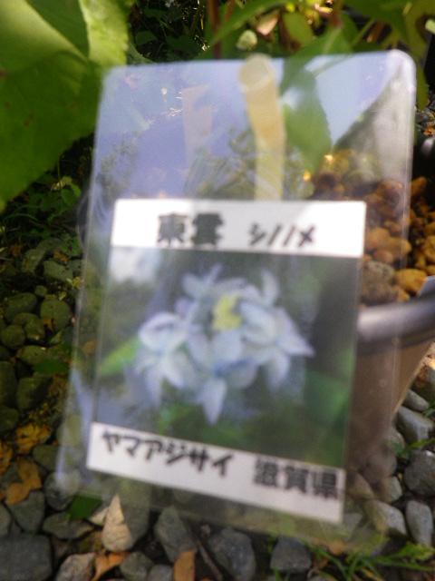 27-1) 「東雲(シノノメ)」