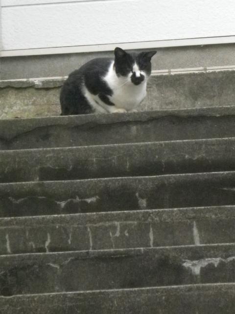02) 前居所となりのアパート階段で蹲っていた(うずくまっていた)。