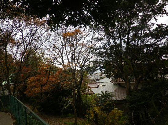 1-13) 光明寺裏、伝・東海道古道を進行中。 _ 7:53am頃