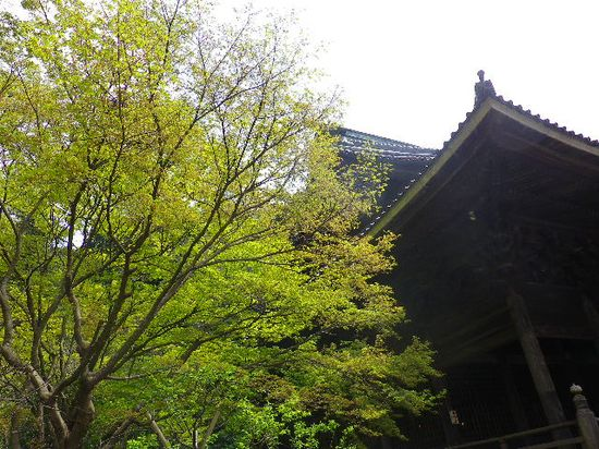 10) 緑が日に日に濃くなってゆく季節  _ 日蓮宗「長興山 妙本寺」 _ 鎌倉市大町
