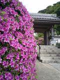 06)鎌倉市大町「安養院」山門前のツツジ