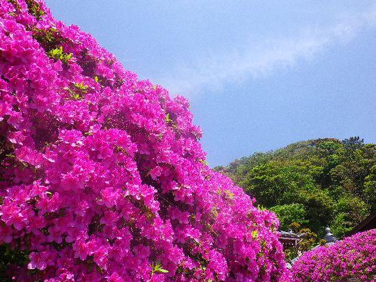 04) 12.05.13鎌倉「安養院」、ツツジ満開の頃。