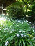 07) 花の白がすっ飛んで写ってしまうので、日陰の花へ近づいて撮った。