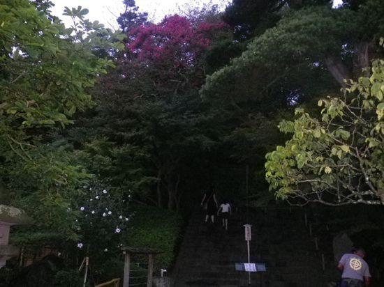 18) 百日紅の木 _  その4_1/2