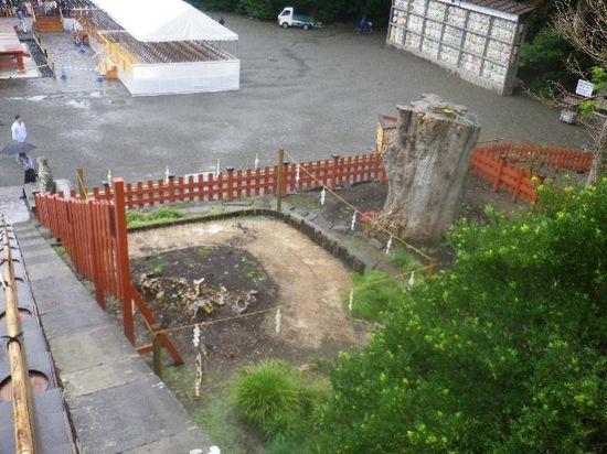 05)  倒壊した大銀杏の、残された根が有る方。 右上は、切断されて植えられた幹の方。