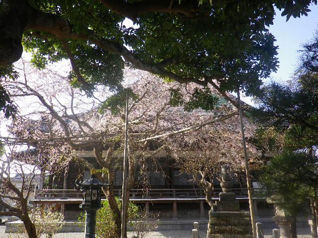 02) 通称 ' 日朝さま(にっちょうさま) ' とか ' ニッチョさま ' の「本覚寺」。