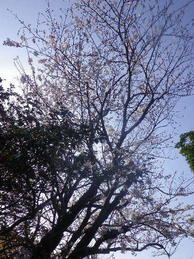 04) 方向がわかるよう鐘楼も入れたかったけど、低い朝の陽光を濃い樹の葉で遮って撮ったつもり。