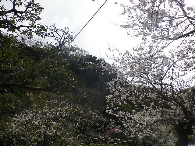 25)  私立 材木座幼稚園