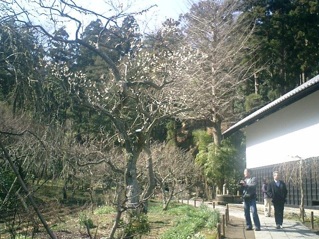 28)東慶寺、墓苑方向の山を観る