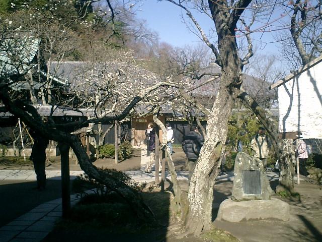 36)東慶寺、鐘楼下から書院方向を観る