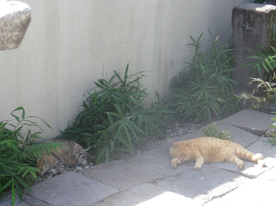 01) 左は初遭遇で、名前を聞いたら「渋」に通じる命名で ' シブ '(本名)とのこと。右は  ' ジュディ・ダイブル '(   本名 ' ブータロー ')で、皆から仲間外れの猫であると私が