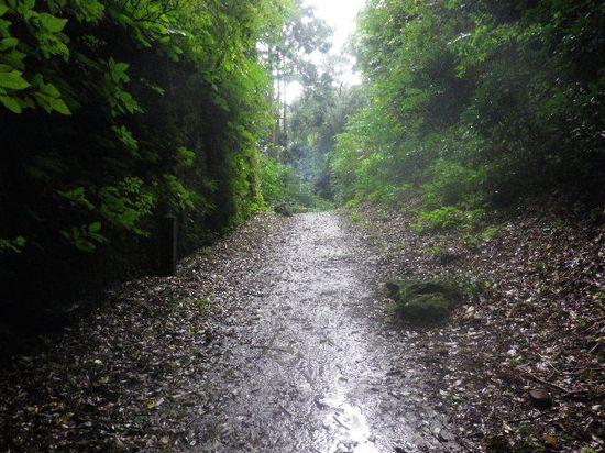 17)  写真16)を登りきって平坦な区間を少し進んだ位置で撮った。光った道路の先端の下が写真18)以降の下り道。写真左の側溝に水が流れるほどの大雨が有るとすれば、ココが「滑川」