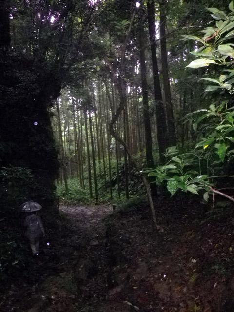 19) ポッカリ木立に囲まれた場所へ近づくが・・・ ・・・