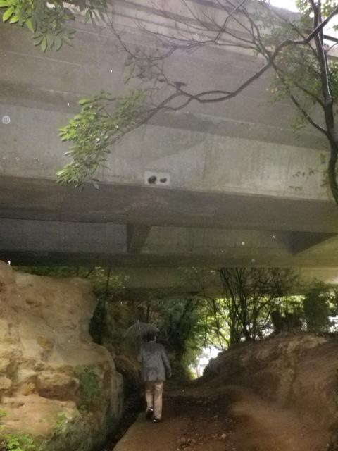 23) 「横浜横須賀道路」 の下を通過  _ 10:49am頃