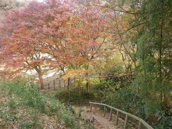 02) 階段状の道を登りながら、振り返って撮った。
