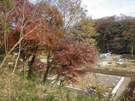 09) この地域も、今夏 台風塩害の影響で紅葉に冴えがない。