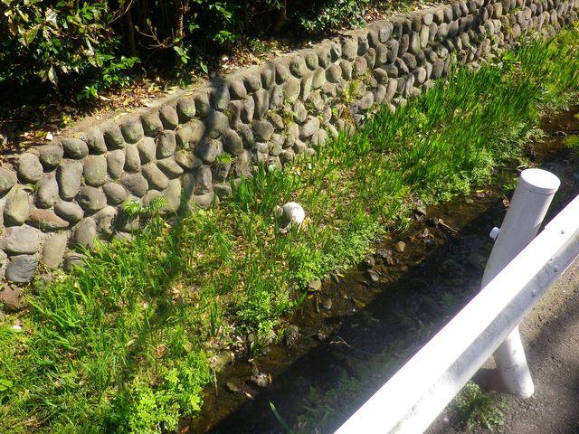 03) 川底のネコ発見!