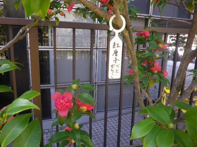 14) ' 紅唐子(べにからこ) '
