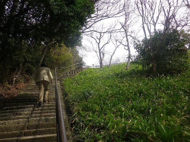 02) 階段から見える崖一面には ' シャガ ' が生えていた。 花咲く頃に再訪しよう。 _ 鎌倉市浄明寺6丁目18/20