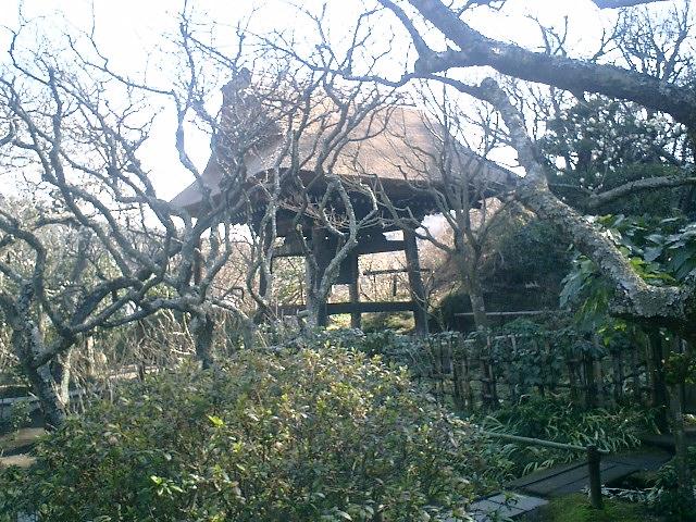 31)東慶寺、鐘楼。周囲は梅の古木