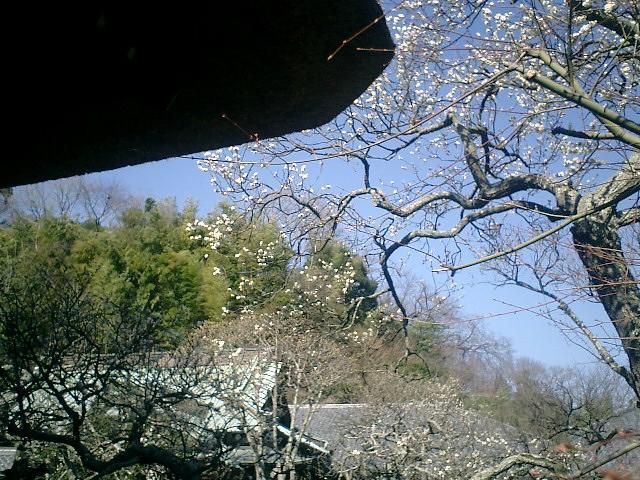 34)東慶寺、鐘楼下から本堂裏山の竹林を観る