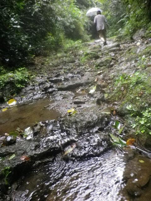 14) 中くらいの礫がころがる区間の道。道は、写真の右上から奥へ。) _ 10:31am頃