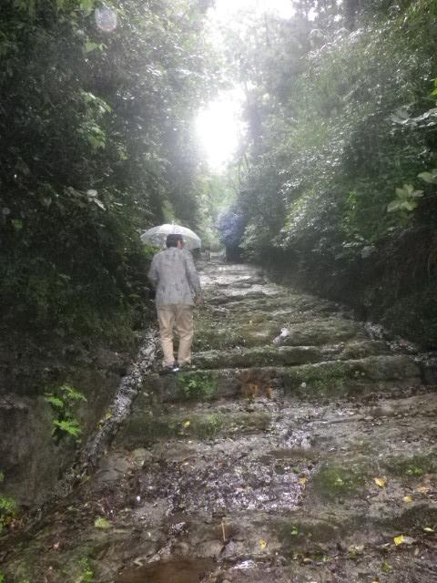 15) 切り通された壁とともに、近世かもしれないが 人手にて階段状に加工された岩盤道。 _ 10:35am頃