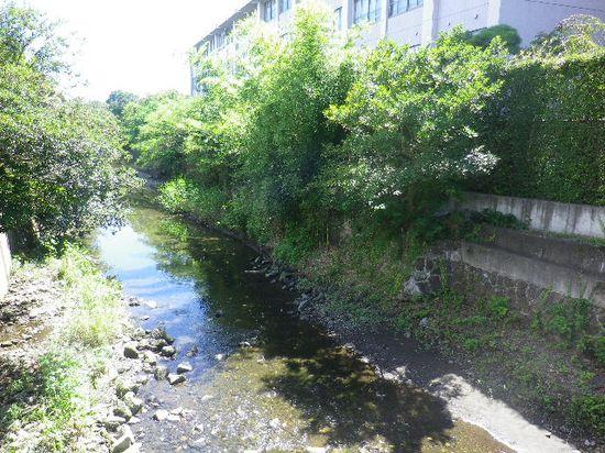 04) 滑川下流方向。右上は鎌倉女学院校舎で、立替前はコッチ側が運動場だった・・・ ・・・ンなぁコトは、どうでもヨイ。