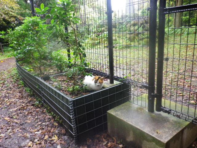 14-02) 約2週間前の12.11.11の訪問時に遭遇の猫と再会