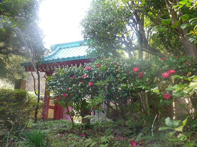 04) 山門の外、赤い椿の花。