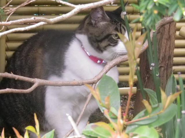 01) 近所の飼い猫、本名 ' トラ ' ちゃん。 本名判明以前につけた芸名 ' スクウィレル '。