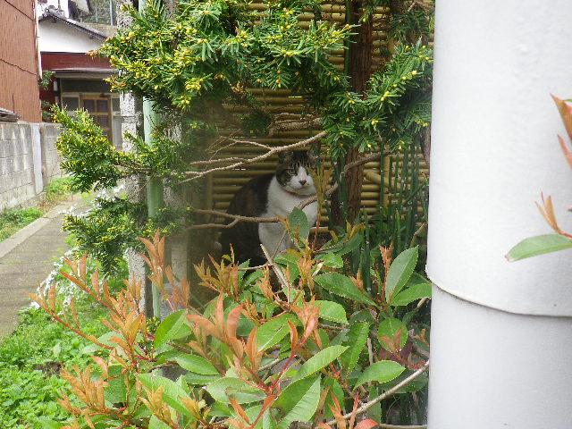 02) 近所の飼い猫、本名 ' トラ ' ちゃん。 本名判明以前につけた芸名 ' スクウィレル '。
