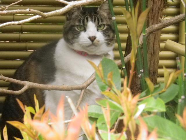 03) 近所の飼い猫、本名 ' トラ ' ちゃん。 本名判明以前につけた芸名 ' スクウィレル '。