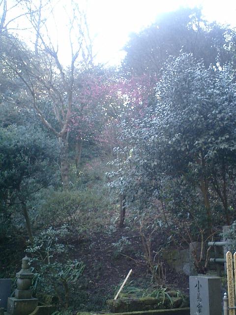19)東慶寺、墓苑周囲の山。早朝の低い陽光を反射