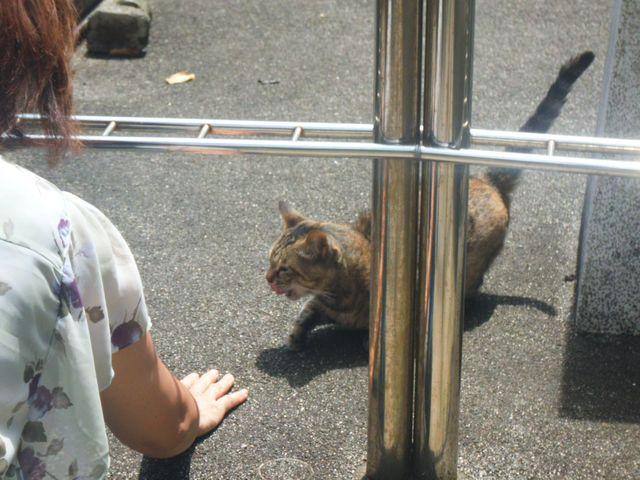 2-01) 石屋さんのM氏が77歳で職をリタイヤされて解説を受けられず、もはや識別不能になってしまった人懐こい若そうな猫。