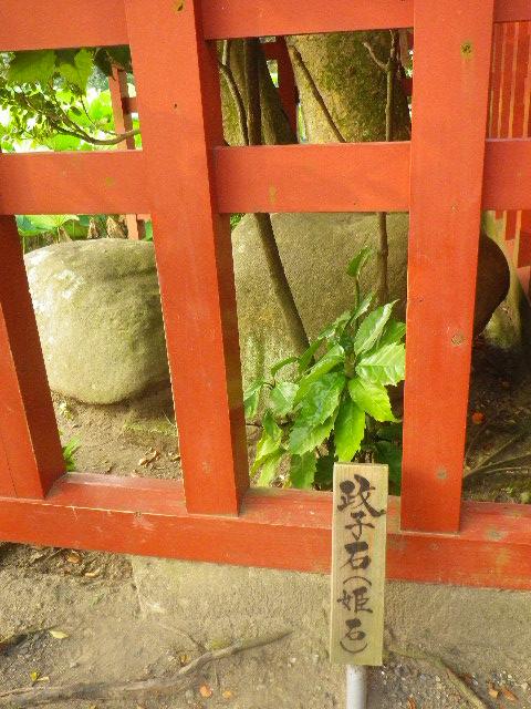 06) ' 政子石 '