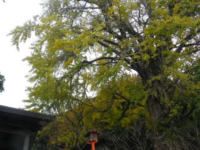 01-1) 「荏柄天神社」    _ 鎌倉市二階堂