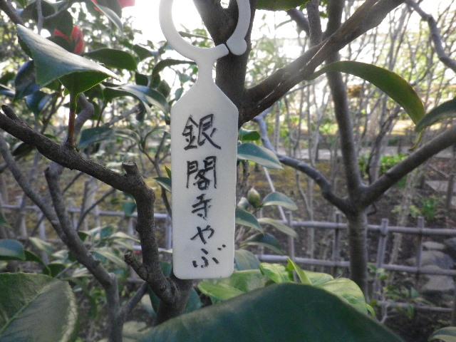 """01-1) """" 銀閣寺やぶ """""""