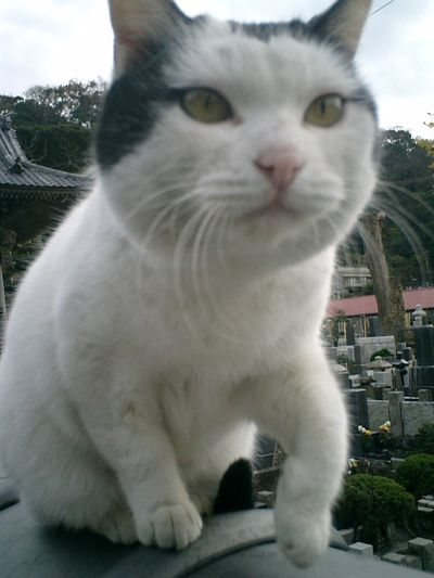 12)鎌倉市材木座「光明寺」それじゃぁ!ってぇんで、'金子マリ'の強烈な!'鼻先10cm接写'。