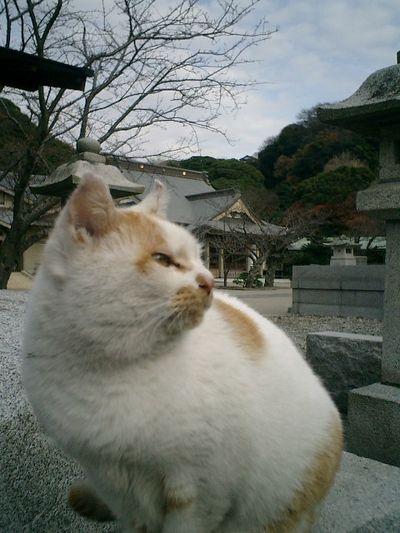 18)鎌倉市材木座「光明寺」食休み態勢の'ジンジャー・ベーカー'。