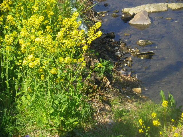 02-2) これは、黄色い花を撮っただけ。