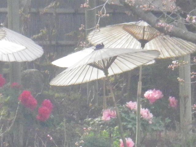 05-1) 源氏池外周の、有料 ' ぼたん園 ' の少ない覗き見できた方向をセコくズームで撮った。