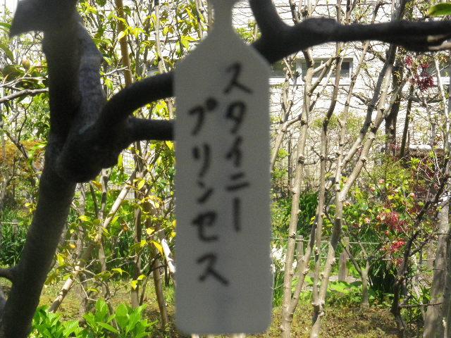 07-1) 「スタイニープリンセス」
