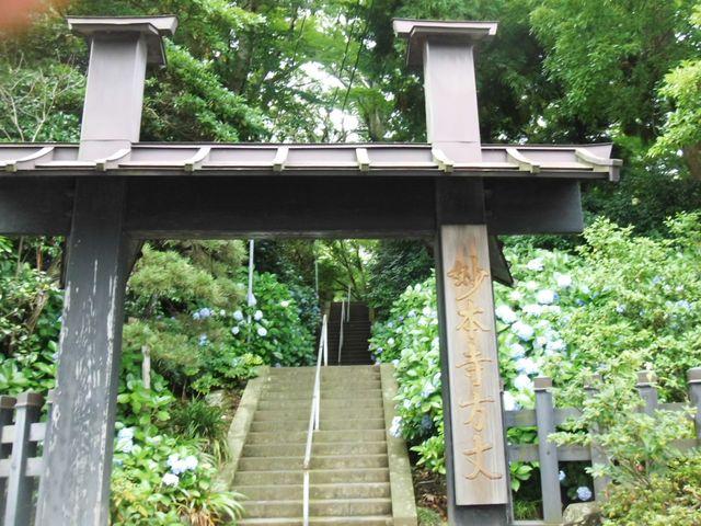 01-1) 14.07.04鎌倉「妙本寺」の紫陽花