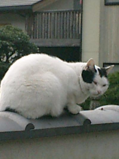 10)鎌倉市材木座「光明寺」説明の都合上、先に命名ス。本名'おかめ'なのだけれども、私の命名は「金子マリ」ダ!実は午前中にも遭遇したのだけれども撮り損なったので、とりあえずズ
