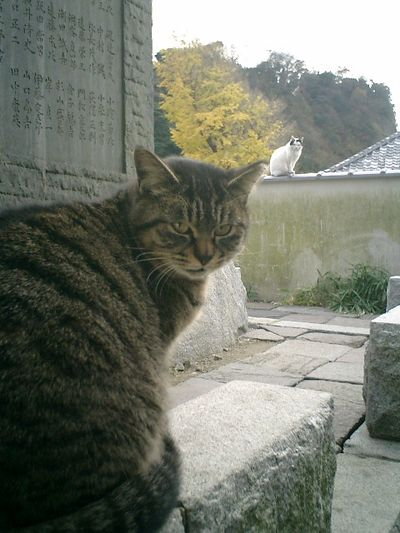 16)鎌倉市材木座「光明寺」食い終わった'森園勝敏'は食休みの態勢。'金子マリ'は、塀の上で順番待ち。
