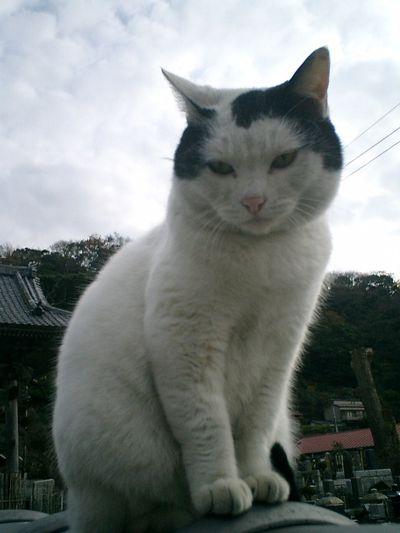 17)鎌倉市材木座「光明寺」念押しにもう一度、'金子マリ'のプロフィール用?写真を撮った。