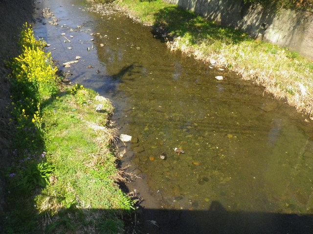 02-1)  滑川上流側。 中央やや下方の鴨二羽を撮ったつもりだけど、すっかり川底の色に同化した写真になった。人間の視覚って、凄いよネ。