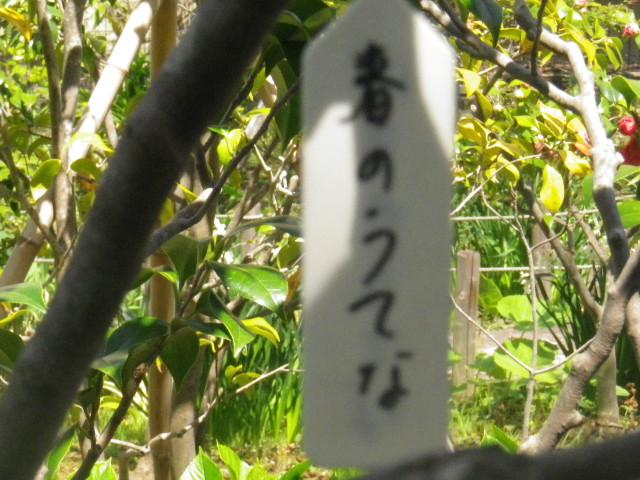 06-1) 「春のうてな」